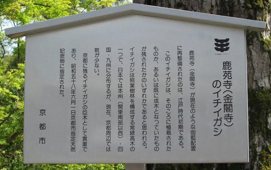 京都・金閣寺・櫟樫
